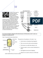 Click4Biology 2.2 Peokaryotes Notes