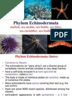 9. Echinodermata