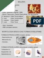 aula de Malária - Biologia.ppt
