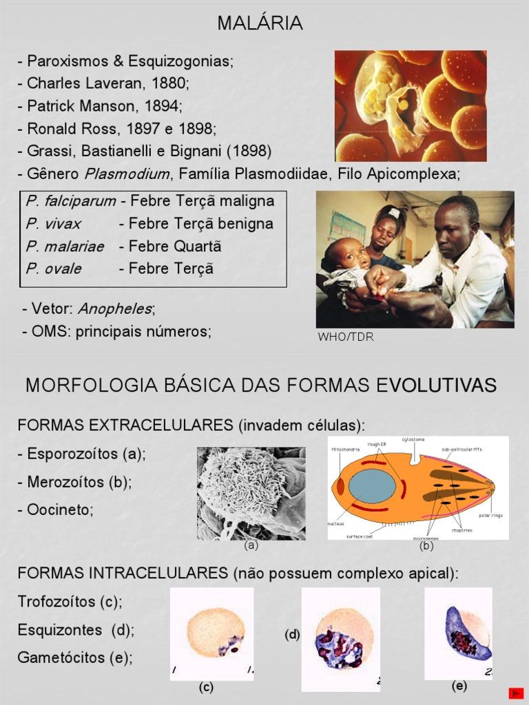 Plasmodium maláriabiológia