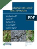 Monitoring Protocol for Amphibians, Reptiles & Bats in Kornati Archipelago