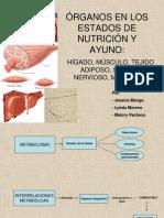 ÓRGANOS EN LOS ESTADOS DE NUTRICIÓN Y AYUNO