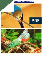 Wonders of Nature Bird Series 1