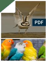 Wonders of Nature Bird Series 2