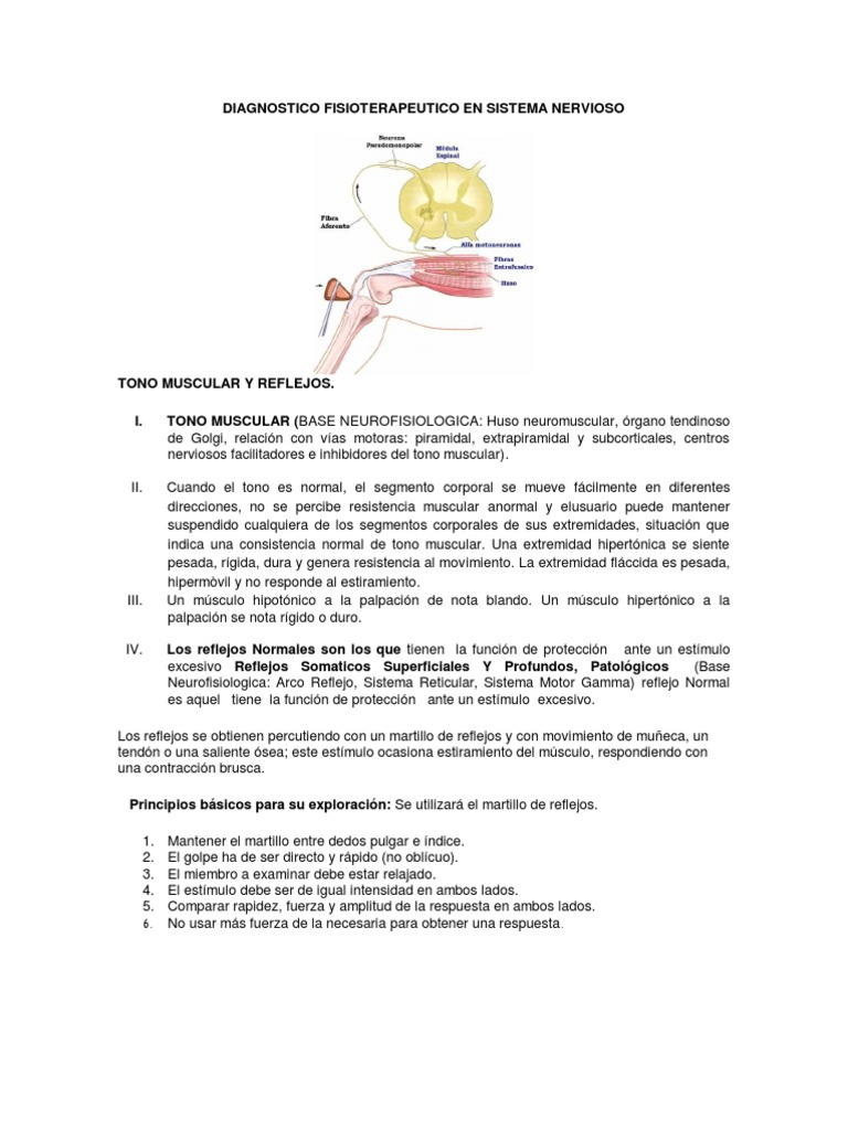 Tono Muscular y Reflejos Diagnostico Fisioterapeutico en Sistema ...