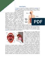 Sistema digestivo.doc