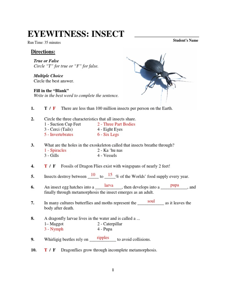 Eyewitness Insect Worksheet Key Beetle Insects