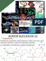 Clase Acidos Nucleicos Bioquimica UAC
