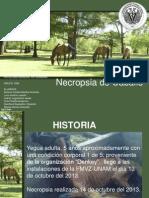 necropsia caballo1