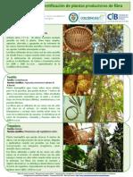 Guía rápida para identificación de plantas productoras de fibra