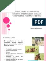 Prevalencia y tratamiento de parásitos intestinales en caballos