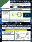 Tema 9. Sistema Nervioso