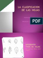 La Clasificacion de Las Hojas