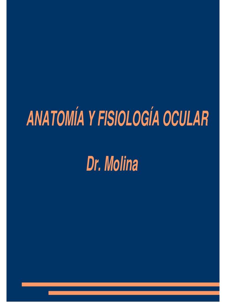 Anatomia y Fisio Ocular 2