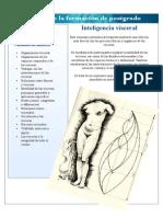 Intelligencia visceral.pdf