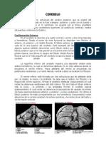 Apunte Clase 12 Morfologia