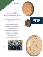 Perfil de suleo - practica.docx