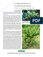 Banana buch top disease.pdf