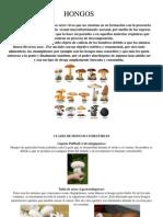 Clases de Hongos Comestibles
