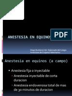 Anestesiologia en Equinos