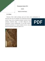 Pneumonia Lobaris (Pn)