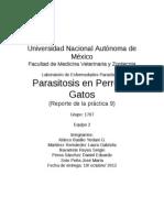 Parasitosis en P y G