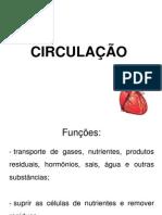 aula 4- SISTEMA CIRCULATÓRIO Fio Humana.ppt