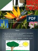 diversidadedasplantas- 3º A JV