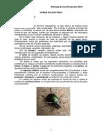 Orden Coleoptera.pdf