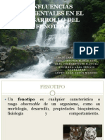 Influencias Ambientales en El Desarrollo Del Fenotipo