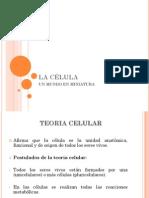 CELULA PROCARIOTA (1)