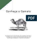 Conheça o camelo