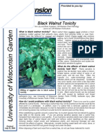 Black Walnut Toxicity