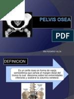 Pelvis Osea2