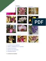 Los diferentes géneros de orquídeas