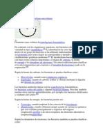 Metabolism1 bactereiano