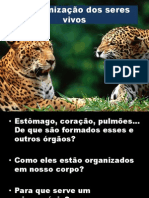 A organização dos seres vivos