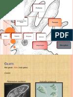 Protozoa klasifikasi, ciri-ciri , dan peranannya