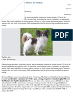 New PRA Gene Identified in Dogs