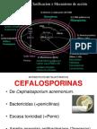 4.3. Cefalosporinas