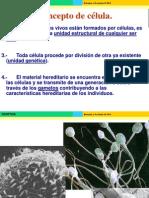 ciclocelular