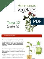 hormonas vegetales FITOHORMONAS.pptx