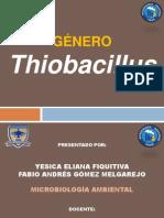 Genero Thibacillus