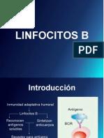 LINFOCITOS B