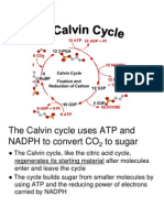 calvin cycle on CAM plants