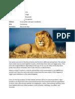 Lion Niche