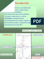 Bio04 Nestor 1