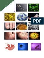 Imagenes de Virus de Enfermedades