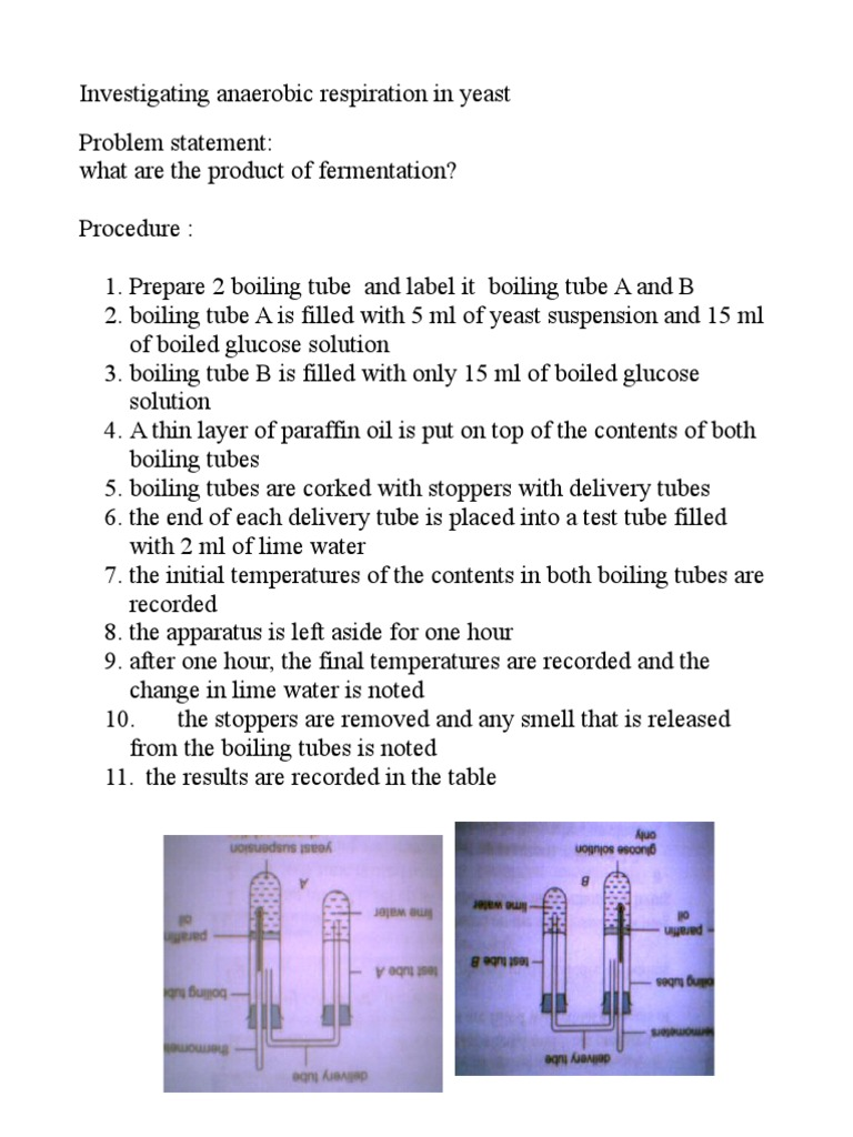 what are the products of anaerobic respiration in yeast