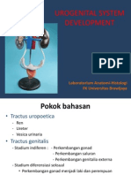 2.b. Anatomy Embriologi Uro (Pd2011)